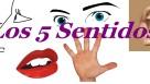 Los sentidos -video-