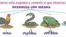 Vídeo: Los animales vertebrados