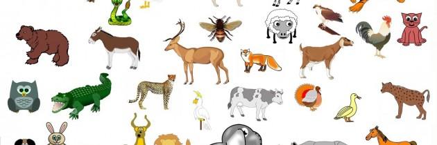 Animales. Clasificación general (Para saber más)